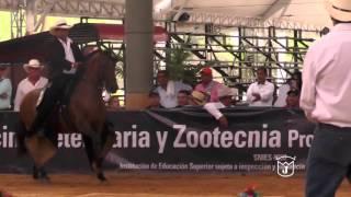 SAMARITANO DE 3A, Trote y galope BUCARAGrado B 2016