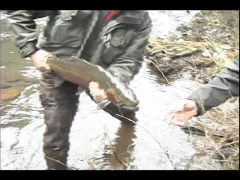 Bobber Fishing for Oregon Coast Winter Steelhead