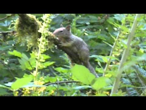 Baby Tree Called Baby Tree Squirrel Wild