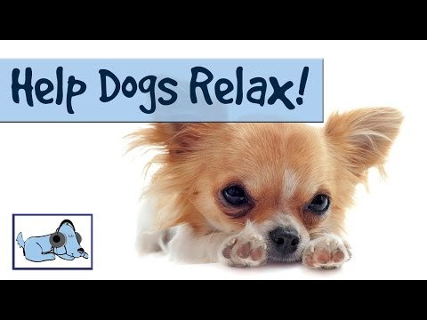 Help dogs relax! Music for puppies or dogs with anxiety or stress: Stop barking, crying, scratching!