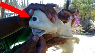 WEIRDEST Things Caught In The Ocean!