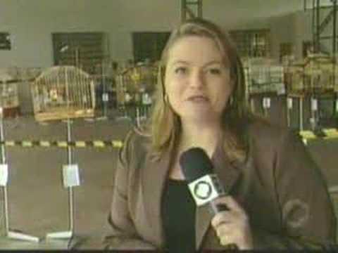 Torneio de Passaros em Paranavaí 22/10/2007
