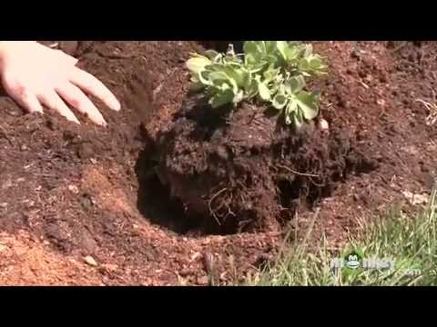 Inspecting Garden Soil Conditions