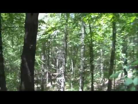 Hiking the F. Gilbert State Forest in Foxborough, Massachusetts.