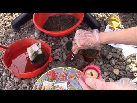 Download Youtube: Комнатные растения из семян. Как вырастить?