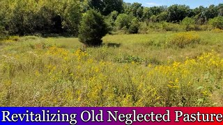 Revitalizing old neglected pasture