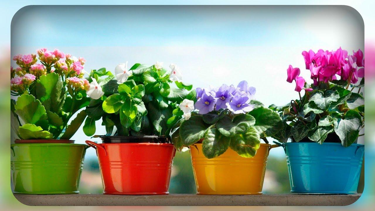 11 натуральных удобрений для домашних цветов