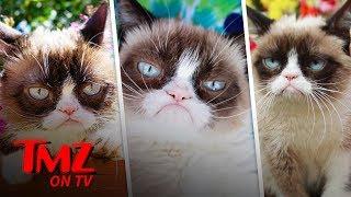 Grumpy Cat Has Died | TMZ TV