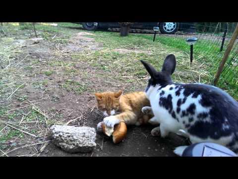 Hase vergnügt sich mit Katze