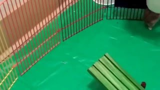 Mr. Skittles (our winter white hamster) is on the playground Part 8