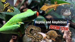 Reptile and Amphibian Room Tour Summer 2017
