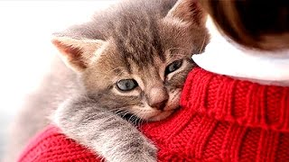 CATS LOVE THEIR HUMAN OWNERS  Compilation | Funnycat 12