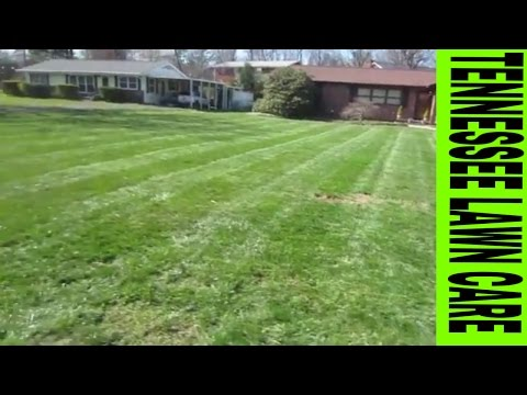 "Kicking Grass  Vlog #5  Workman's Comp ! ""Tennessee Lawn Care"""