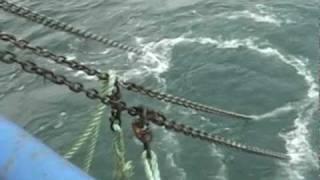 -gigantic-dinosaur-carcass-caught-by-japanese-fishing-trawler