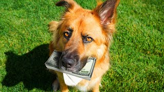 Letting our Dog Decide Who Gets $10,000!!