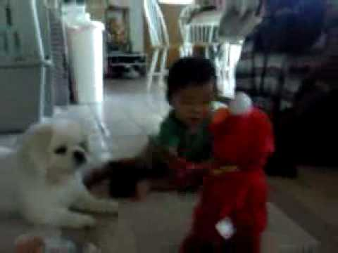A Boy, A Dog and Tickle-Me Elmo Video