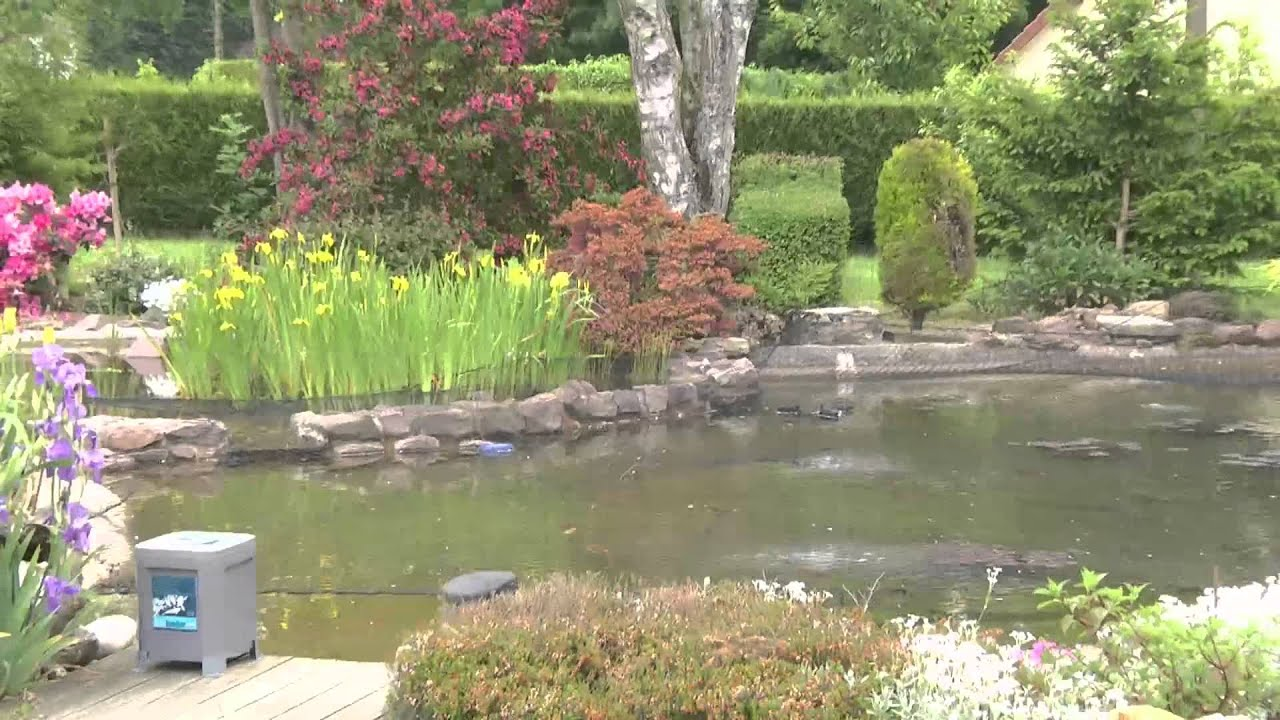 Le superbe bassin de jardin d 39 alain youtube for Photo bassin de jardin