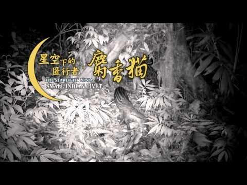 星空下的匿行者-麝香貓 3分鐘國語版