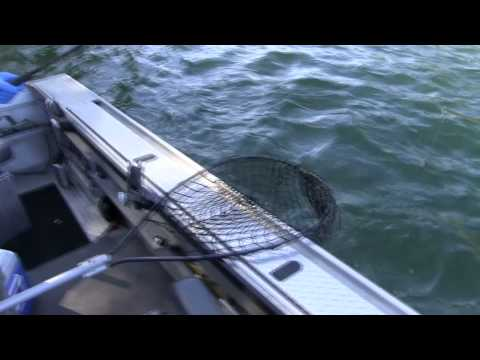 2011 0923 Cowlitz River Salmon fishing with guide Lance Fisher.mp4