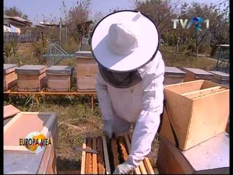 Albinutele lui nea Cristea.VOB