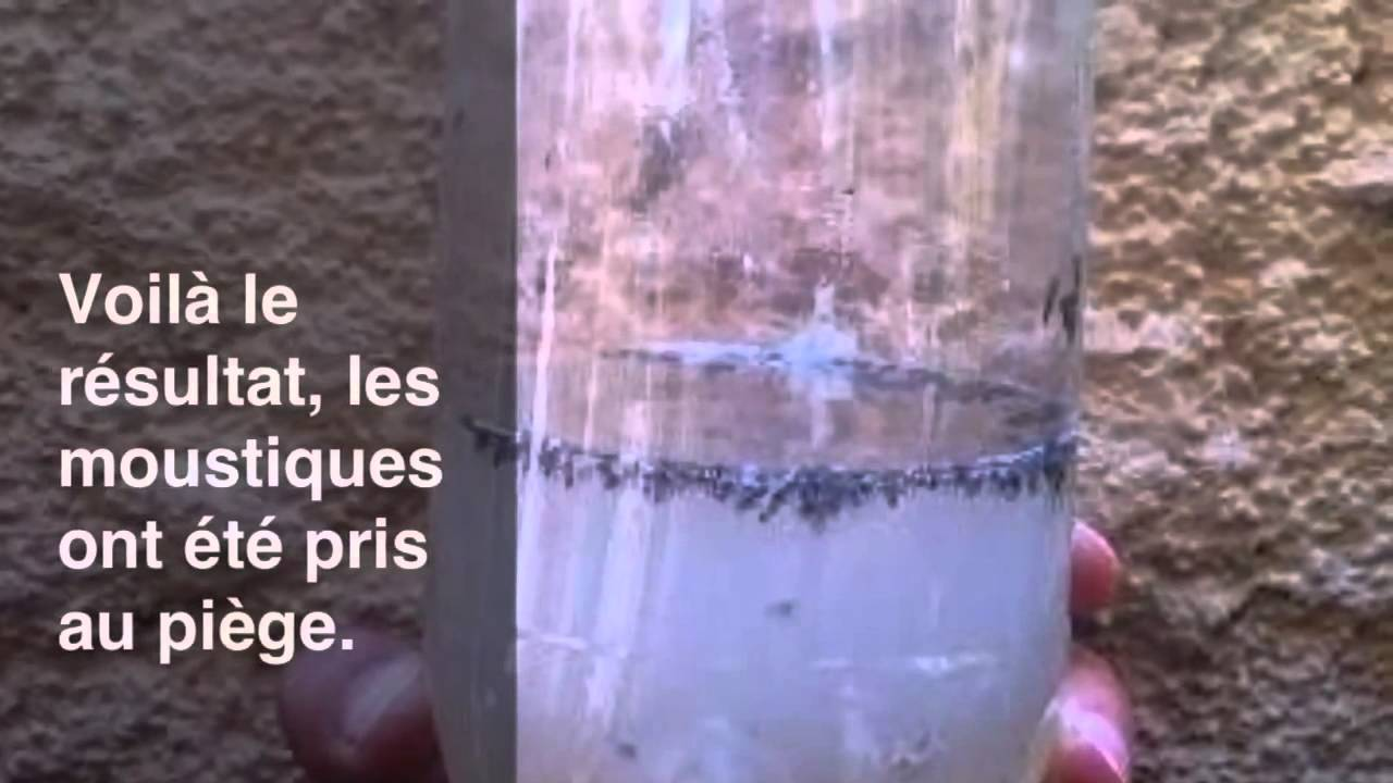 Pi ge moustique cologique youtube - Piege a moustique ...