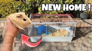 GUINEA PIG FOUND In DUMPSTER GET'S NEW HOME!