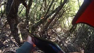 chasse sanglier corse bisinchi