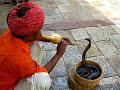 Un encantador de serpientes en Jaipur