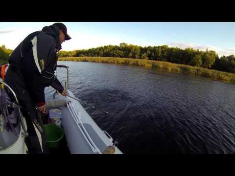 видео рыбалка на днепре 2016