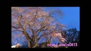 ♪夜桜お七 坂本冬美 /  cover  歌詞付き