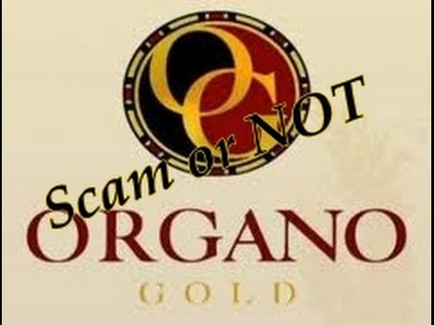 Is Organo Gold A Scam | Or Is Organo Gold A Legitimate Network Marketing Business