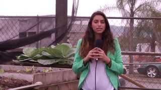 Composta- Vivo Recycling, Caguas Puerto Rico