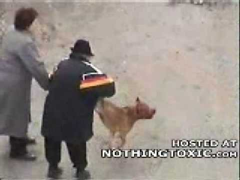 Dog From Hell Attacks cant Die !!!
