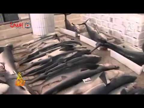 سوق السمك بسيدي إفني على قناة العيون الجهوية