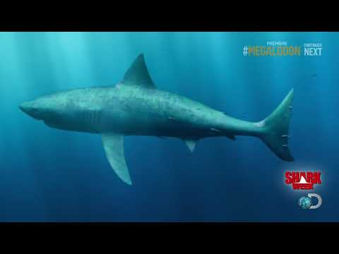 Coast Guard Footage Of Megalodon. Climate Change ' Megalodon Sightings