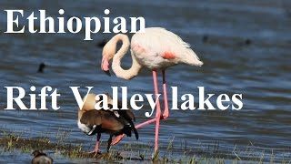 Ethiopian Rift Valley lakes