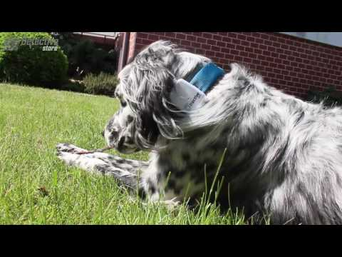 GPS tracker for dogs and cats Tractive - Detective Store