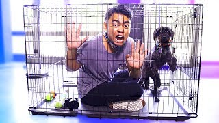 Escape The Dog Cage Challenge!