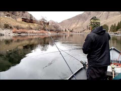 Steelhead Fishing in January on the Salmon River in Idaho 2014