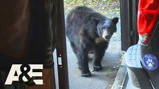 Live PD: Bear-Icaded (Season 4) | A&E
