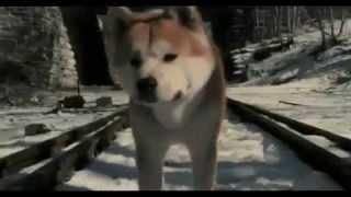 Hachi: A Dog's Story (2009) - trailer Nederlands ondertiteld