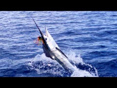 Striped Marlin Fishing, Los Barriles Mexico B.C.S.
