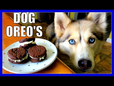 DIY OREO DOG COOKIES | Snow Dogs Snacks 50 | DIY DOG TREATS OREOS