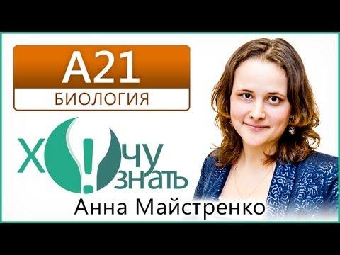 A21 по Биологии Демоверсия ЕГЭ 2013 Видеоурок