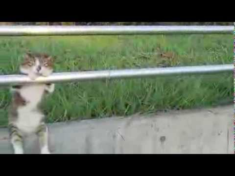 ripozanta kato коты уже очеловечиваются