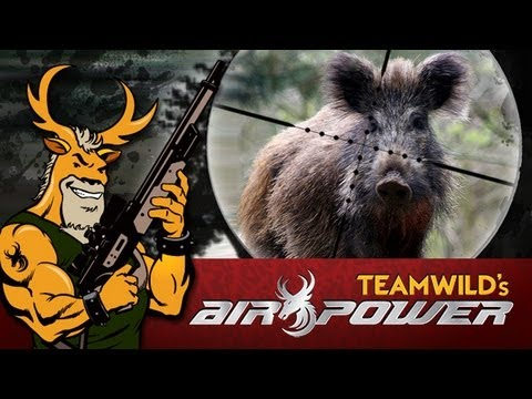Extreme Airgun Hunt: Feral Hogs with Benjamin Rogue .357 Big Bore Airgun
