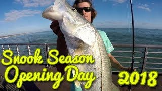 Snook Season Fishing Opening Day 2018