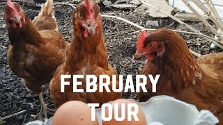 February Allotment tour & Chickens
