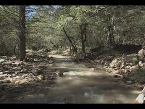Chiricahuas: Mountain Islands in the Desert