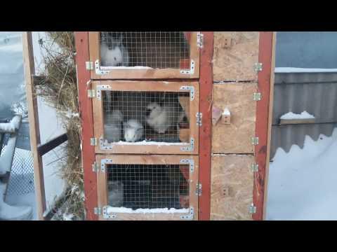 Клетка для кроликов. Изготовление без ошибок